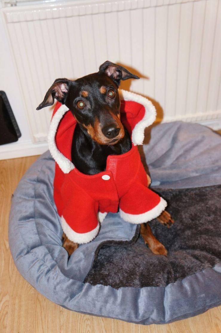 Stella var också jultomte.